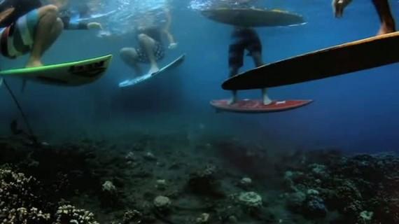 reef-imaginarium