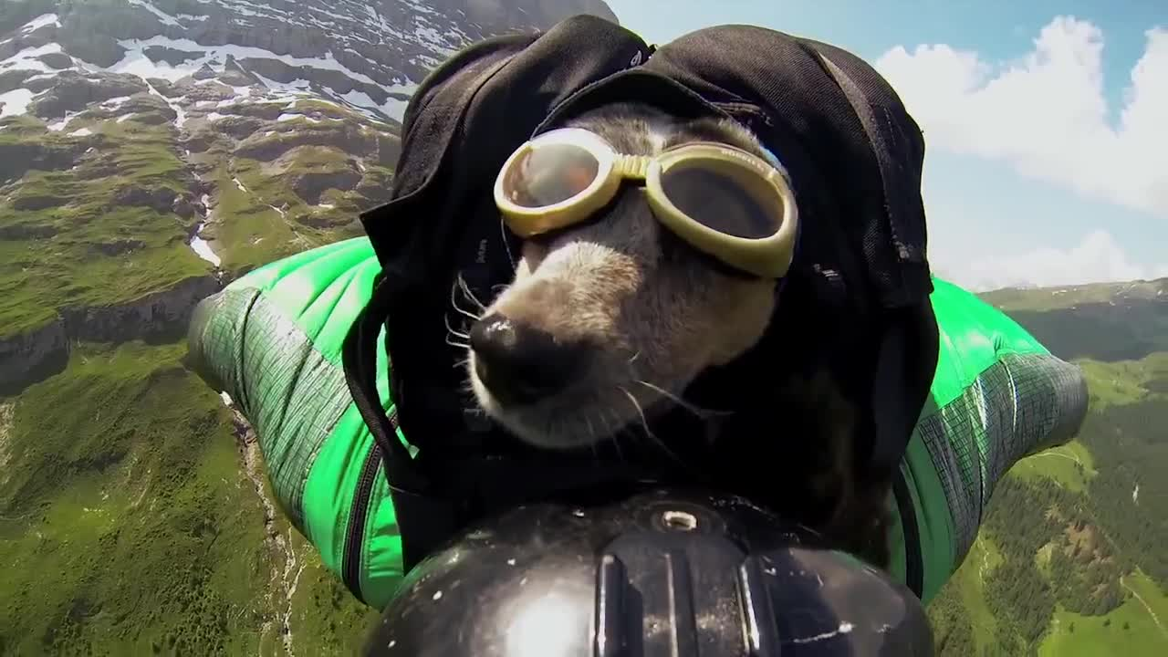 When Dogs Fly by Dean Potter wingsuit